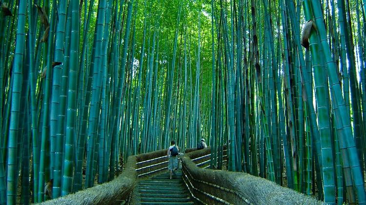 Bamboo Forest Sagano