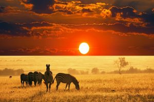 cheap flights to south africa -- african-safari-sunset