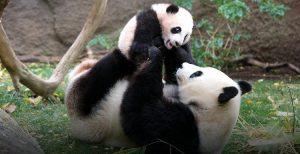 cheap flights to san diego heros-giant-panda