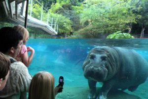 cheap flights to san diego zoo