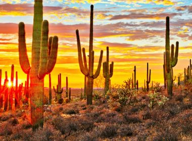 cheap airfares to phoenix